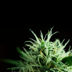 420 seeds, photography style